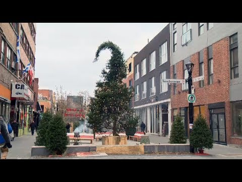 Montreal's ugly Christmas tree gets 'surprising' reaction