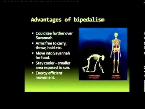 Matric Revision: Life Sciences: origin of wo/man (3/13): bipedalism (1/4): advantages