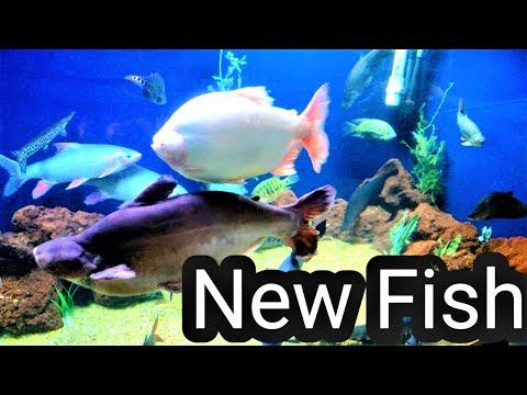 Getting New FISH