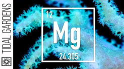 Testing for Magnesium in your Reef Tank