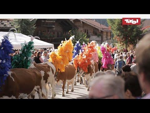Cattle Drives in the Alps (Kelchsau, Tirol)