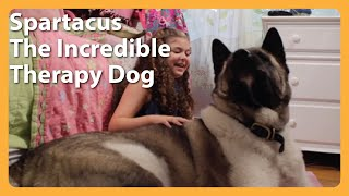 Spartacus The Incredible Therapy Dog Lifts Spirits thumbnail
