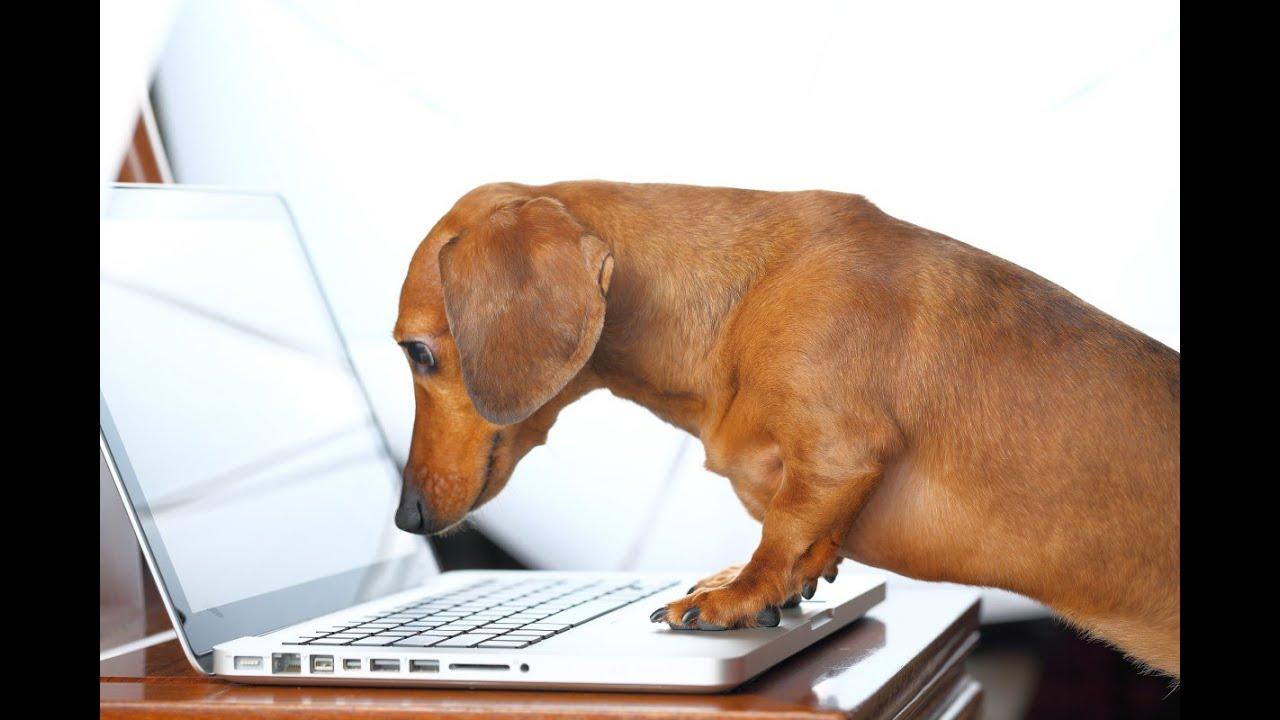 Смешные собаки - Собаки и техника