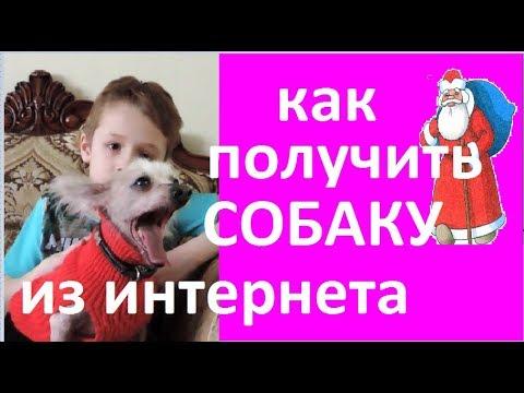 Как попросить у деда мороза собаку