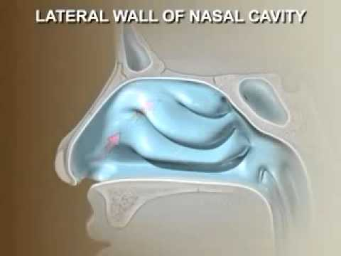 Anatomy of the Nose - YouTube
