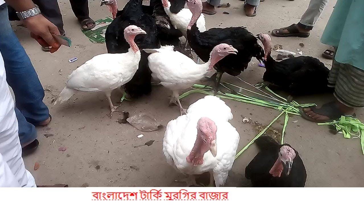 Turkey For Sale >> Turkey Hen Market In Bangladesh How Turkey Sold In Bangladesh