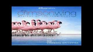 The Crimson Wing: Mystery of the Flamingos : The Hatching