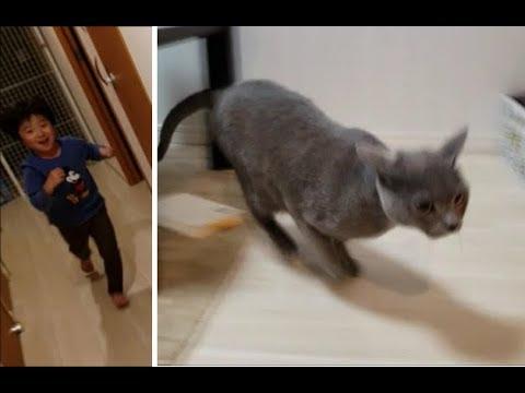 貞子と化した子供から逃げ惑う猫たち