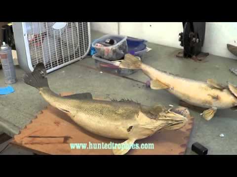 Walleye Restoration