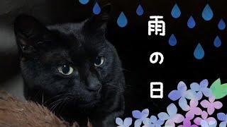雨の日はお家で仲良く・・・ How to enjoy a rainy day at home