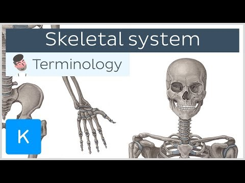 Skeletal System - Anatomical Terminology For Healthcare Professionals | Kenhub
