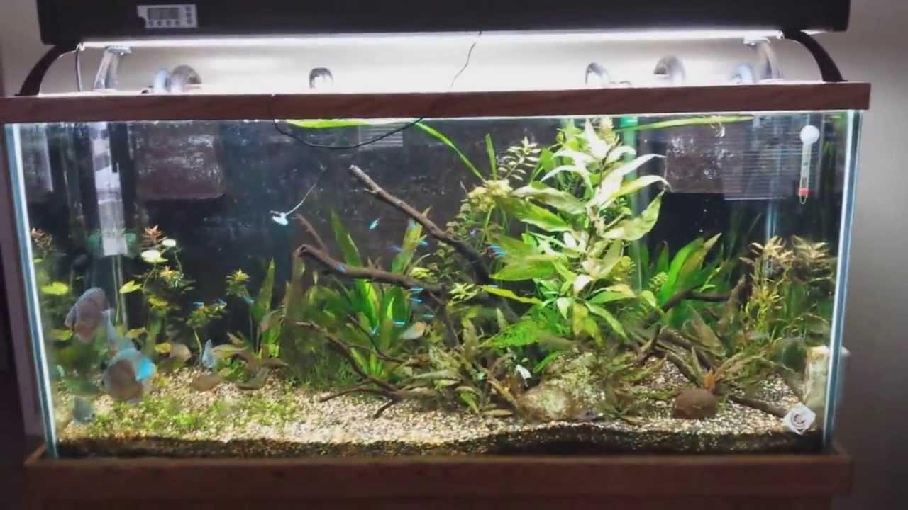 90 Gallon Planted Discus Tank Youtube