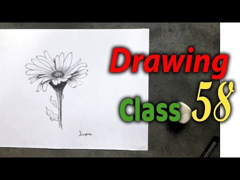 drawing-class-58,-easy-flower-drawings-in-pencil