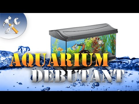 aquarium d butant youtube. Black Bedroom Furniture Sets. Home Design Ideas