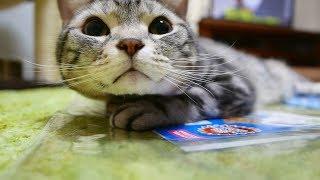 おとんがホームセンターから「マルカン 猫用 アルミ涼感ソフトマット」...