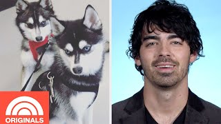 Joe Jonas and Sophie Turner's Puppy Family   My Pet Tale   TODAY ORIGINALS
