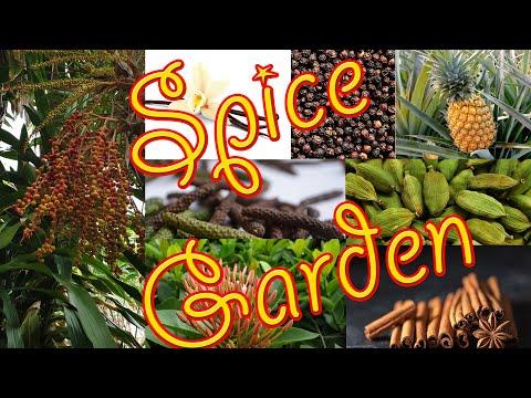 Spice Garden visit in Kalutra, Sri Lanka