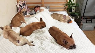 What It's Like Sharing A Bed With 2 French Bulldogs