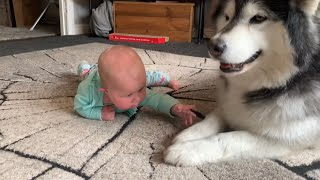 Baby Gives Paw To Dog And Confuses Her (So Cute!)