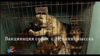 Вакцинация собак с Невинномысска
