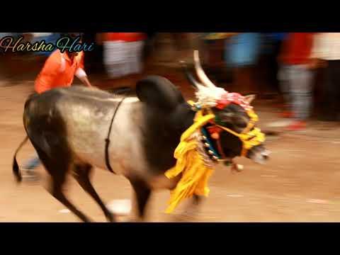Masur hori habba_Hindu samrat hori habba_hori habba...2019