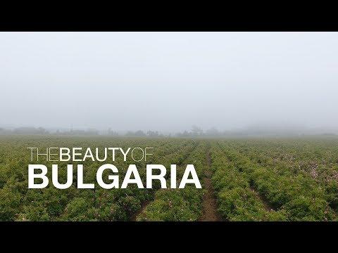 Розобер / Roses Bulgaria 4K
