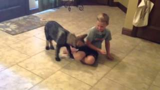 Red Rock K9 Pup Training At Home