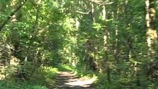 Lato w Makoszowskiej Kotlinie - (P)O(B)ssession