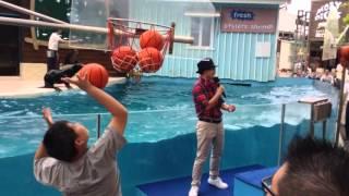 20160424 花蓮海洋公園「海獅投籃比賽」 thumbnail