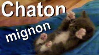 chaton mignon parole de chat