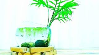 (Green 일상/수경재배/어항) 테이블야자, 물배추 …