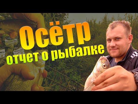 Осётр. Рыбалка в Зарайске летом (фидер, лещ)