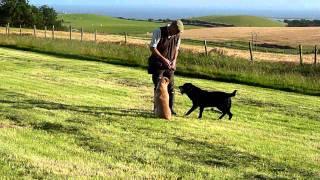 Ashdale Dog Training