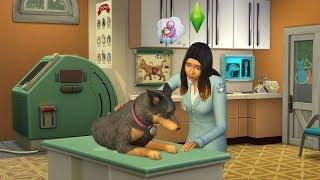 """Игровой процесс ветеринара в дополнение """"Кошки и собаки"""" для игры The Sims 4!"""