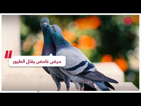 مرض غامض يقتل مئات الطيور في عدة مدن أمريكية | RT Play