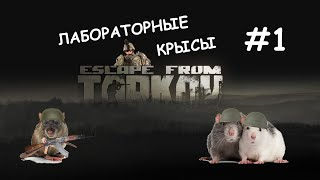 ЛАБОРАТОРНЫЕ КРЫСЫ #1 ESСAPE FROM TARKOV