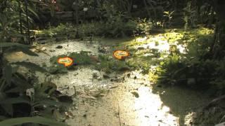 Tropennacht im Botanischen (17.05.2008)