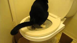 Cat Toilet training with CitiKitty Cat Toilet Training Kit