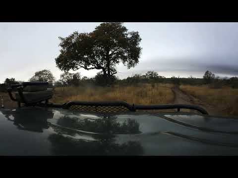 360 degree - Sabi Sand game, drive following mobile leopard