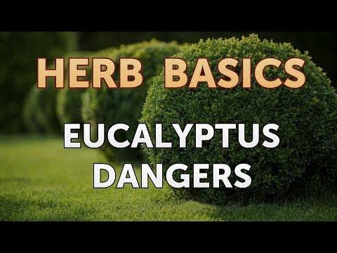 Eucalyptus Dangers