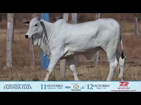 LOTE 131