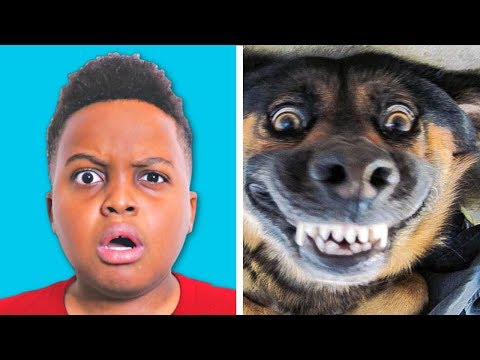 FUNNIEST ANIMALS SKITS ?Try Not To Laugh - Shiloh and Shasha - Onyx Kids