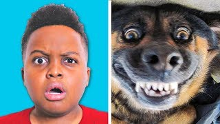 ANIMAL COMPILATION! - Shiloh and Shasha - Onyx Kids