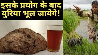 खेती में वरदान है ये जैविक फॉर्मूला gibberellic acid as growth promoter in organic farming