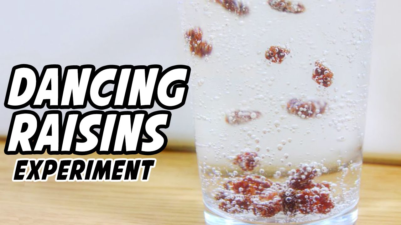 Dancing Raisins Experiment YouTube – Dancing Raisins Worksheet