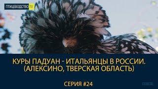 видео Питомник птиц в Подмосковье «Птичий дом»