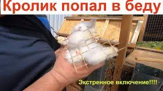 Кролик попал в беду пришлось сломать клетку.   кролиководство