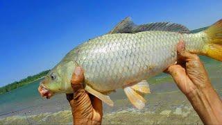 Сом подвёл сазан выручил Отличная рыбалка на слиянии Август 2021 г