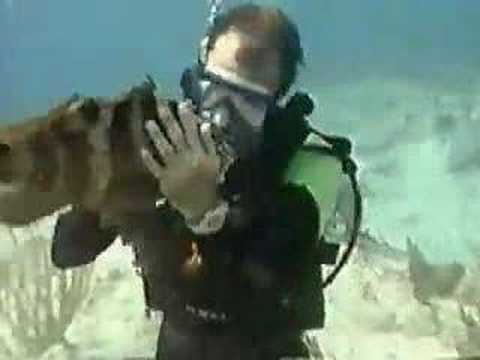 Cayman Islands Grouper Vacation Dive