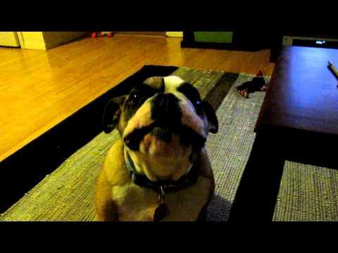 Bulldog motor sounds